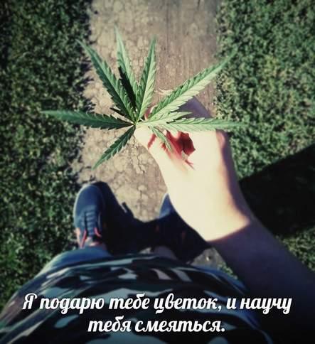 Песня подари мне коноплю где купить в спб семена марихуаны