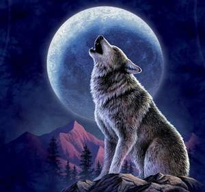 фото волков крутые