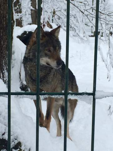 Волки уходят в небеса